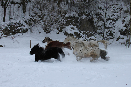 winter-paard