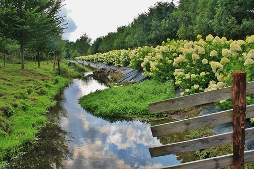 rivier-bloemen